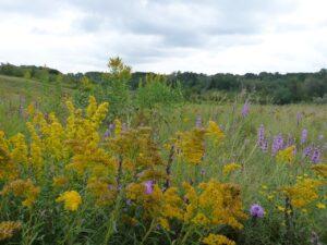 Summer Wildflowers at Meewasin Beaver Creek