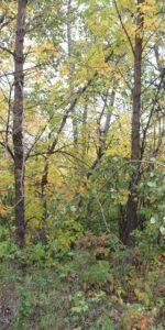 Trees growing in Meewasin Park