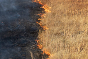 Prescribed fire used in conservation at the Meewasin Northeast Swale